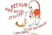 набор котиков