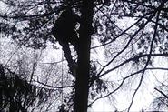 удаление дерево